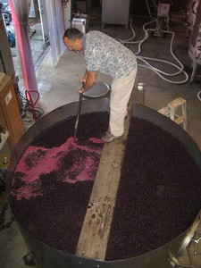 John Poulos punching down Tempranillo